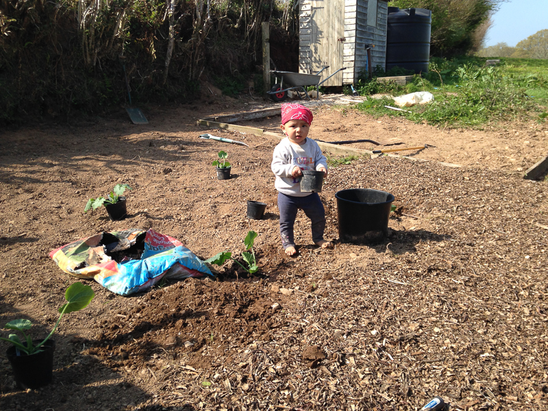 WWOOFing with children – our first time
